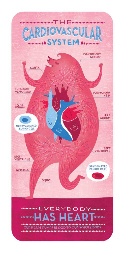 cardiovascular_system_ignotofsky