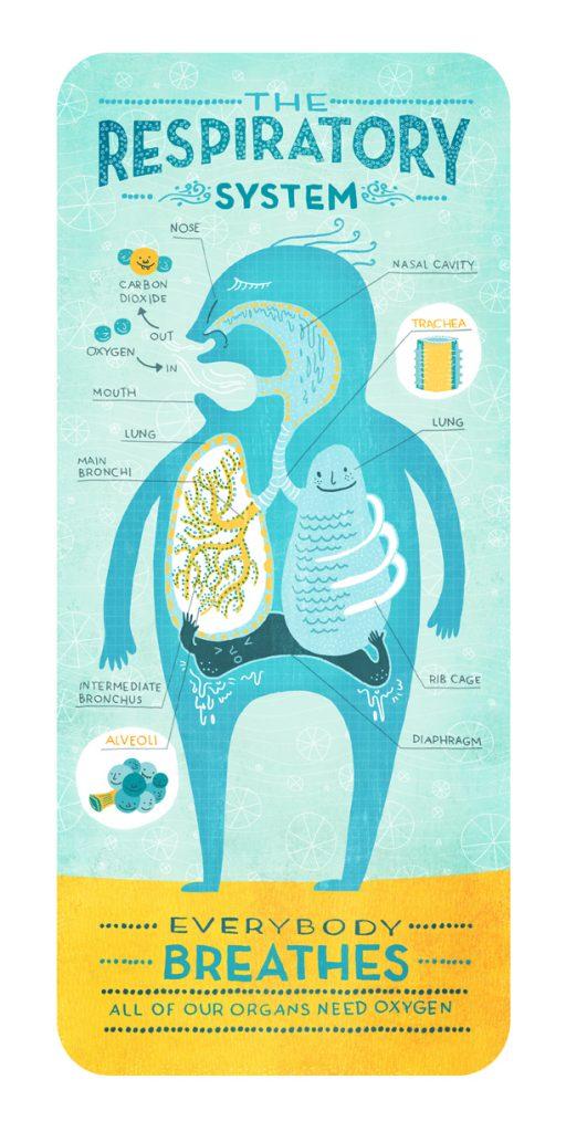 respiratory_system_ignotofsky